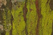 Texturen & Maserung - Texturas
