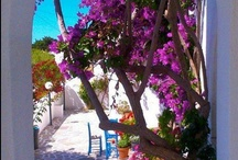 The colours of summer in Paros!.. / Enjoy the beautiful island of Paros full of colours. Enjoy the experience...