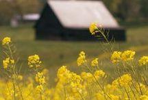Prairie Living / by Sarien