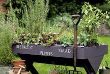 Garden Beautiful / Garden , landscaping . Ideas for outside the house.  / by carmen thomas