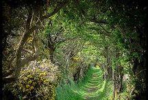 Ireland / #Ireland #Irish #travel #places