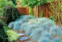 Contrasting Foliage / Beautiful shades to add colour to your garden.