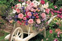 Container Planting / Creating beautiful small gardens using containers.