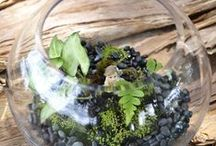 Terrarium / Miniature landscapes in glass containers.