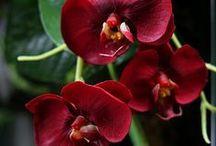 --Ideas of Gardening--
