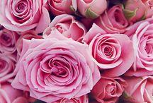 // PINK / Favorite color.