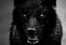 --Black--
