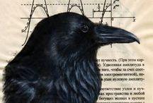 My birdy