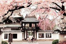 Adventure  Japan