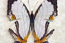Beetles, Butterflies, Dragonflies & Moths / by Jane Bayutti