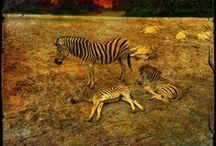 Serengeti 2015 / Mitten im Jungle