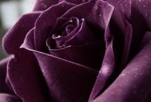 Love, love, love fresh flowers / by Kenya Matthews