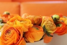 Orange / Inspiration color....