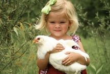 Chickens / Children's book writer, Wendy Salter, and her family raise silkie bantam chickens. In Wendy's Sugarplum Recipes Book Series, the Sugarplum family lives on an organic egg farm with two pet chickens named Tuturella and Bow-Tie Boy.  Wendy-Salter.com Children's book writer