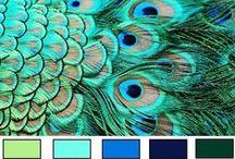 Kleur en fleur