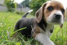 ~ puppies