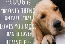 Gorgeous dogs / Dogs