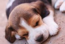 Puppies ♡