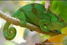 Voyage à Madagascar / Les plus belles photos de Madagascar