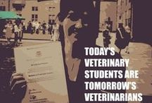 Considering Vet School? Here's my tips / Looking for a career in Veterinary Science? Here's my advice for you
