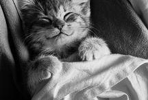 Koty- Cats <3