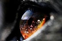Eyes  0-0
