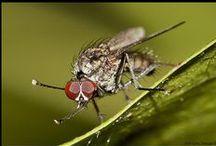 Macrofotografie / Macrofotografie van voornamelijk insecten  www.schuijrendesign.com www.facebook.com/schuijrendesign