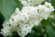 Floral & Garden / by Stephanie