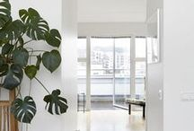 PLANTS IN THE HOME / TRENDY - green plants in the home