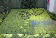 BUGA 2015 in der Havelregion / Blumen und alles was die BUGA betrifft.