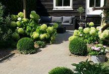De kleine tuin