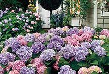Garden / by Jayashree Rajan