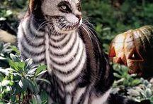 tats&cats