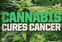 Medical Marijuana Cures / Anyone who has been covering recent news in the medical marijuana field, can attest to the countless remedies and cures associated with the medicine. Only time will tell concerning the true medical properties of the plant, but in the meantime, here are researched cures and ailments that medical marijuana can treat.