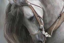 I love horses!!! ♡ / Cavalos *-*