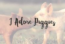 I Adore Piggies / Piggies are simply adorable and I love them. They are smart, kind and playful and I can't wait to have my little piggy one day. Could they get any cuter?