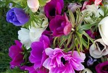 February Flowers / Flowers in bloom in February