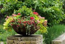 Garden Retreats & Planting Ideas / by Marilyn McIntyre