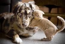 Cute Critters / by Marilyn McIntyre