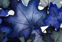 Sólo azul