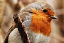 oiseau: passereau / quelle diversité extraordinaire !!!!!