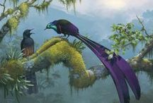 oiseau du paradis, jardinier ... (passeraux)