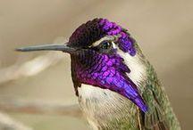oiseau: colibri