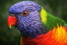 oiseau: perruche, perroquet...