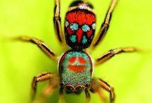 insecte , araignée...