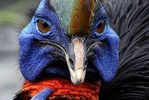 oiseaux: autre