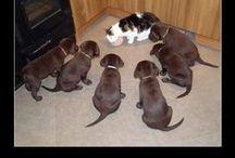 Animals - Cat + Dog / by Carol Green