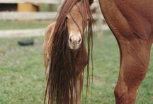 Animals / Animallover - Tiere: Tierisch süße Augenblicke
