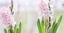 Spring / Frühling - Spring #favouriteseason
