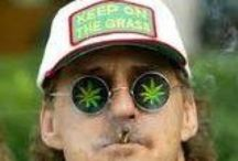 Free marijuana seeds :D / Marijuana seeds, cannabis seeds, pot seeds, grass seeds, ganja seeds, free seeds.